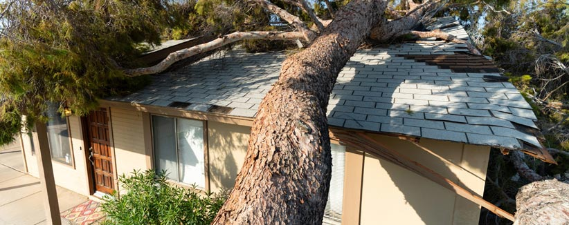 roof damage claims in tampa - Roof Damaged By a Tree
